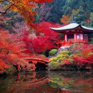 Le jardin japonais - encore 49 photos de jardin zen
