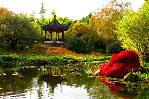 jardin-japonais-avec-un-buis-incroyable