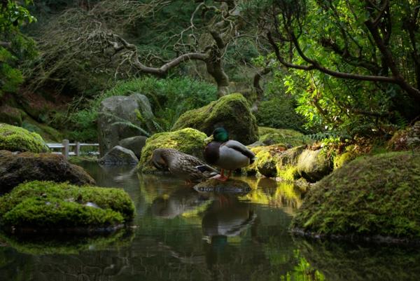 jardin-japonais-avec-un-lac