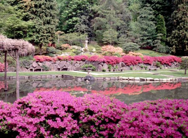 jardin-japonais-très-joli