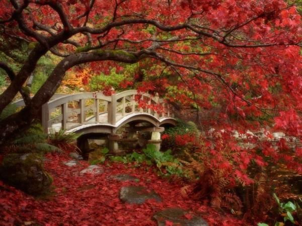 jardin-japonais-un-arbre-à-feuilles-rouges-et-un-joli-pont