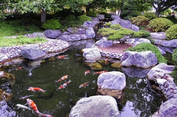 jardin-japonais-un-lac-avec-des-poissons-décoratives