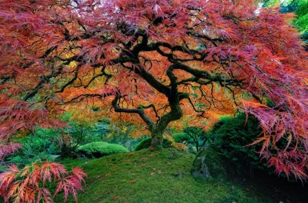 jardin-japonais-vue-du-jardin-japonais-à-Portland