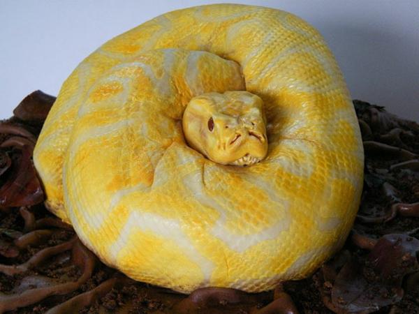 serpent-gâteau-pour-femme
