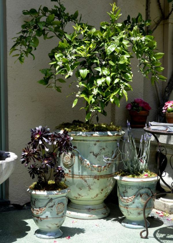 vase-d' anduze-avec-des-plantes