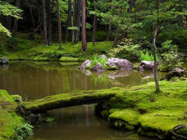 verdure-zen-jardin