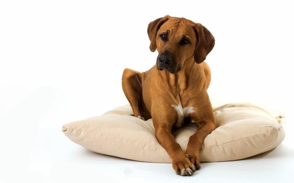 Dog-On-Pillow-resized