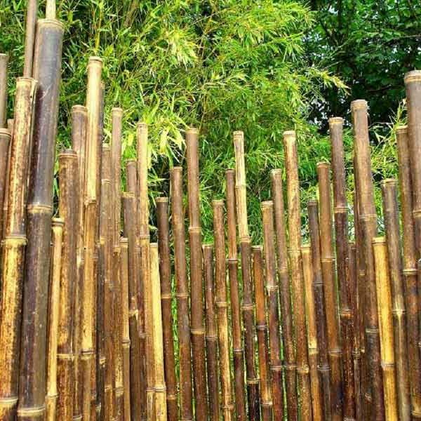Le paravent bambou partout - Cloture en bambou ...