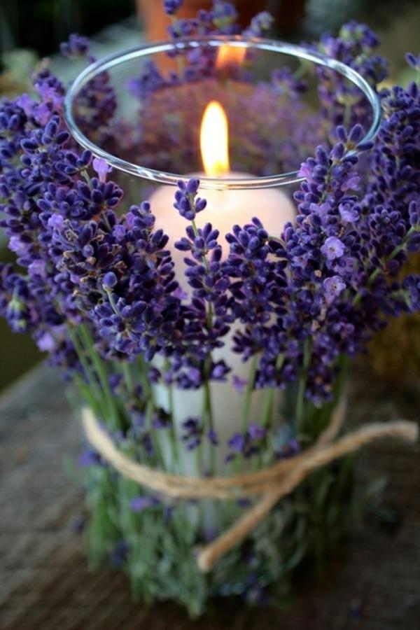 lavender2A-resized