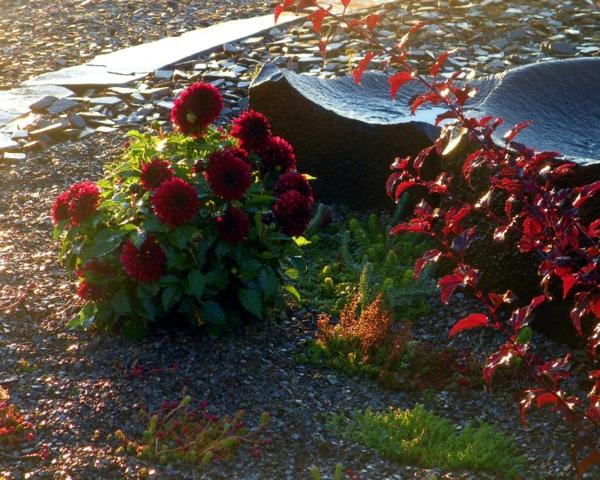 paillage-ardoise-et-jolies-fleurs