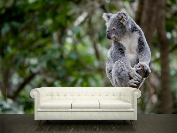 poster-mural-trompe-l' oeil-un-koala
