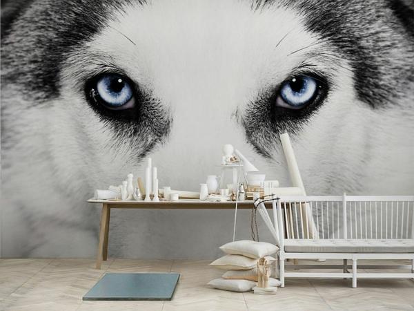 poster-mural-trompe-l' oeil-un-loup