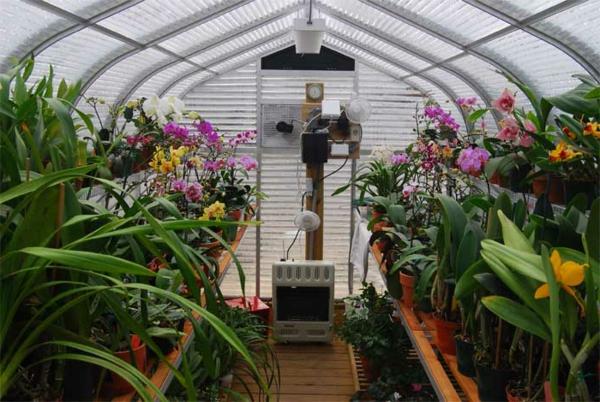 serre-de-jardin-en-polycarbonate-intérieur