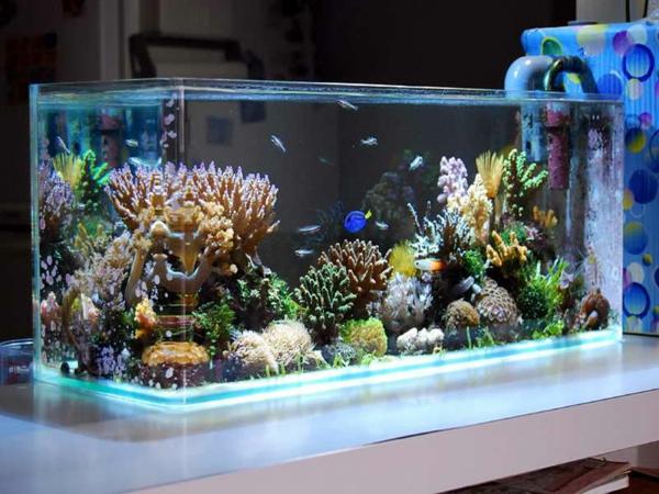 Table basse pour aquarium for Achat aquarium design