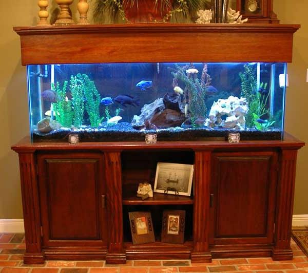 classique aquarium