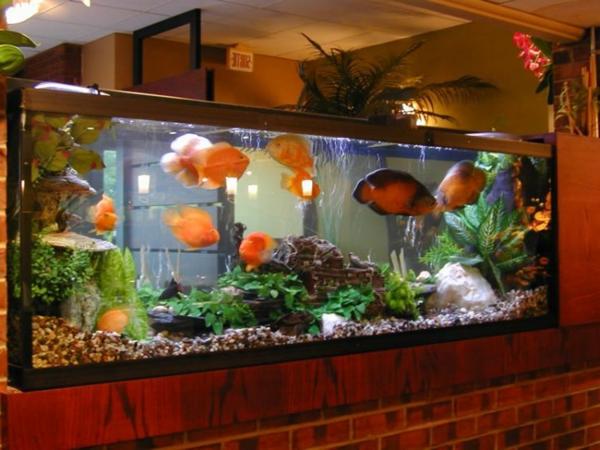 magnifique-aquarium