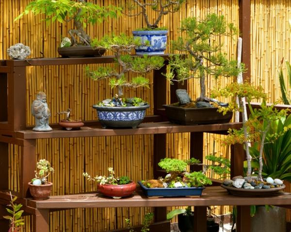 canisse-bambou-étagères-et-bonzai