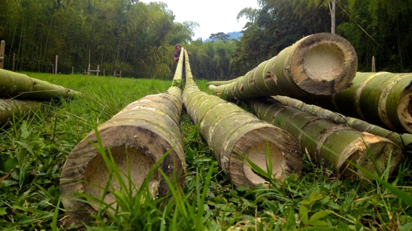 canisse-bambou-brins-de-bambou-longs