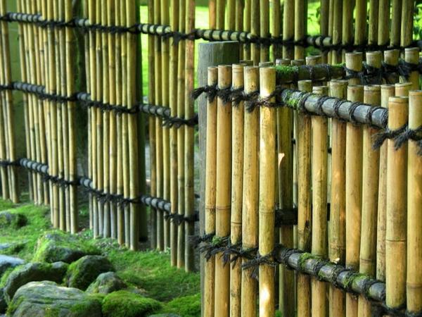 canisse-bambou-de-près