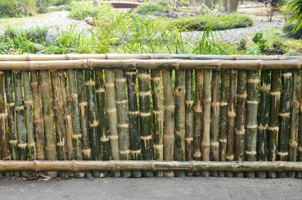 canisse-bambou-pas-très-haute