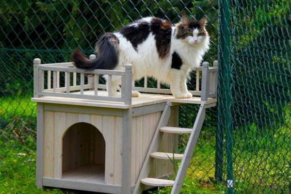 maisonnette-pour-chat-avec-terrasse