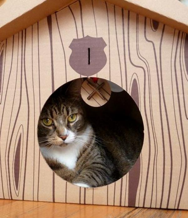maisonnette-pour-chat-en-carton