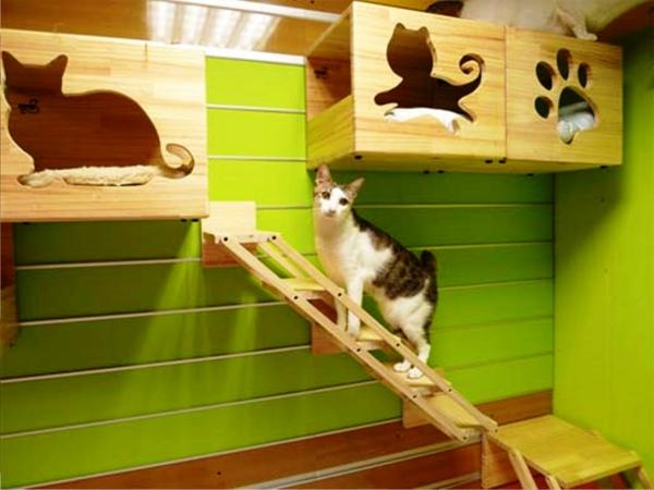 maisonnette-pour-chat-intérieures-murales