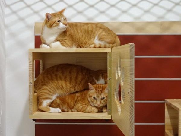 maisonnette-pour-chat-maison-suspendue