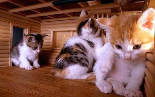 maisonnette-pour-chat-trois-petits-chatons