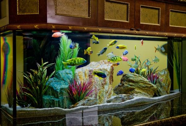 meuble-aquarium-armoire