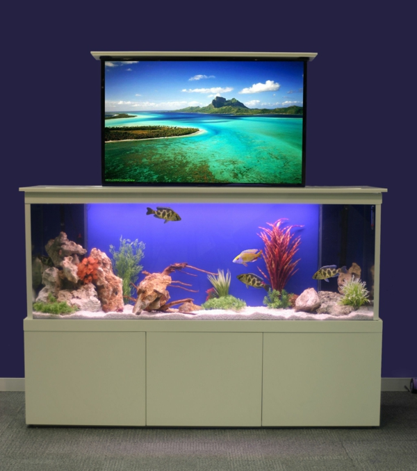 La d coration avec un meuble aquarium for Aquarium meuble tv