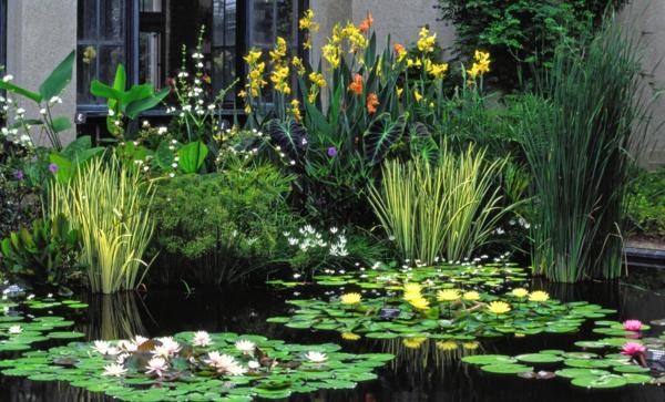jardin-aquatique-devant-la-maison
