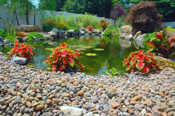 jardin-aquatique-jolie-déco-d'extérieur-miraculeux