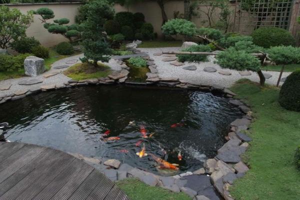 jardin-aquatique-petite-étang-et-poissons-et-jolis-bonzais