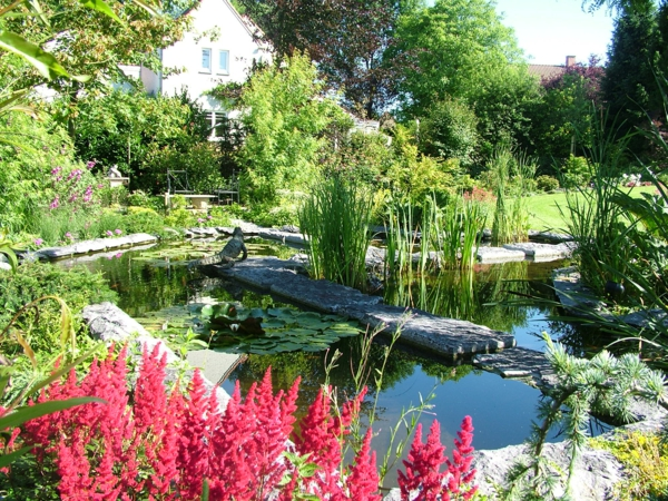 jardin-aquatique-un-grand-jardin