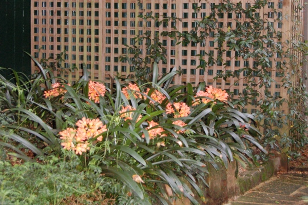 La d coration ext rieure avec un treillis de jardin for Cloison exterieure jardin