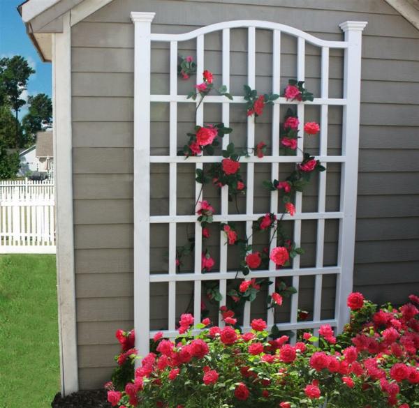 treillis-de-jardin-mural-et-roses-splendides