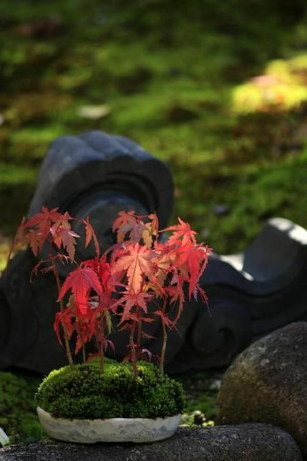 érable-japonais-décoration-bonsai