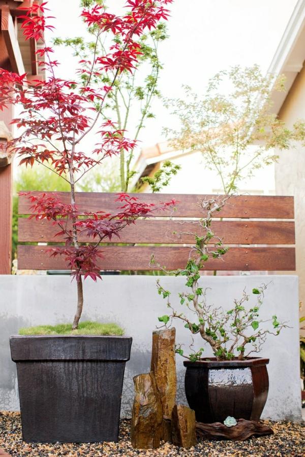 érable-japonais-décoration-exotique