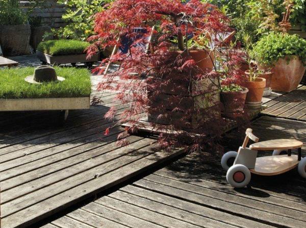 érable-japonais-dans-le-jardin