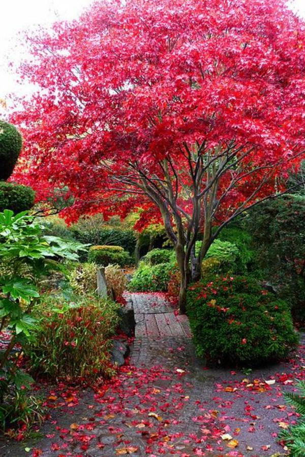 érable-japonais-jardin-romantique