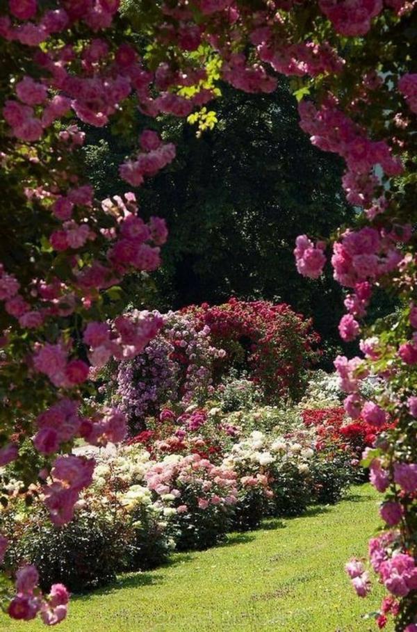 0-jardin-avec-fleurs