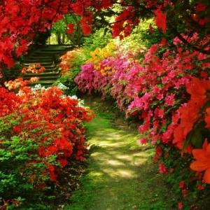 48 idées originales pour haie de jardin !