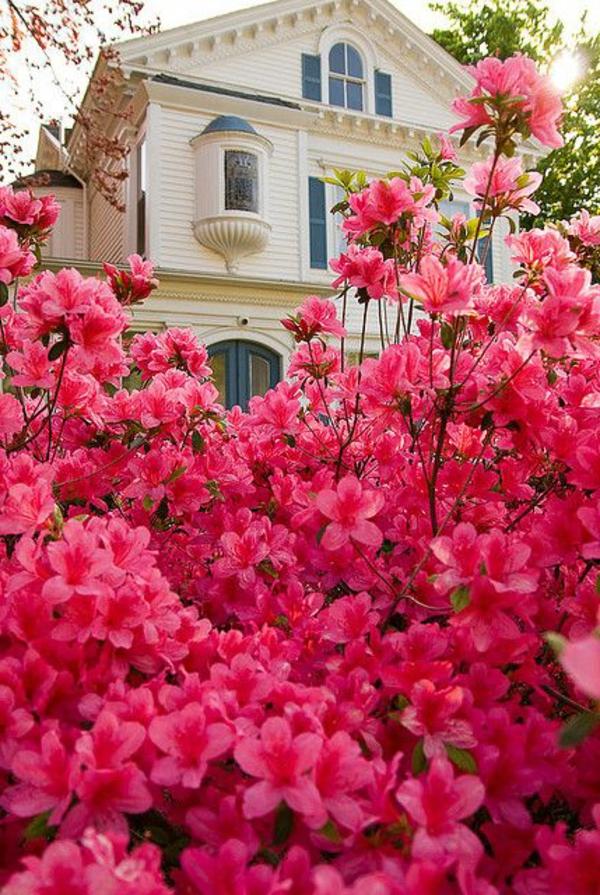 1-haie-de-fleurs