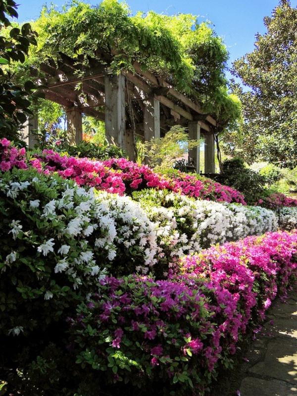 1-jardin-regorge-des-fleurs