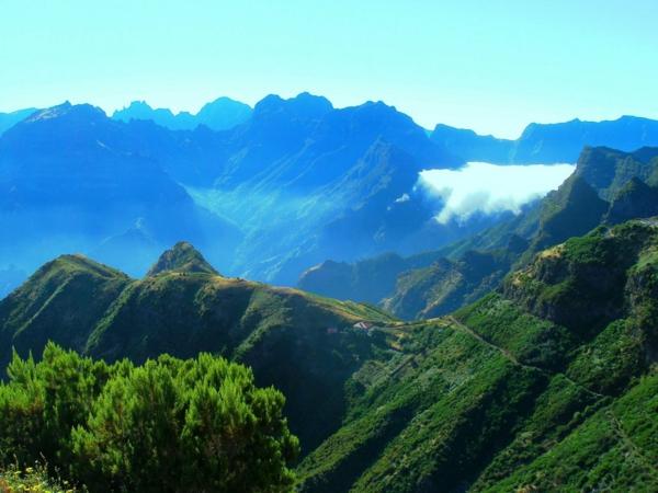 Madeira-nature-magnifique-Portugal-jolie-plantes