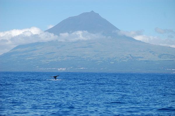 Portugal-Archipelago-of-azores-paysage-océan-mer-animaux-resized