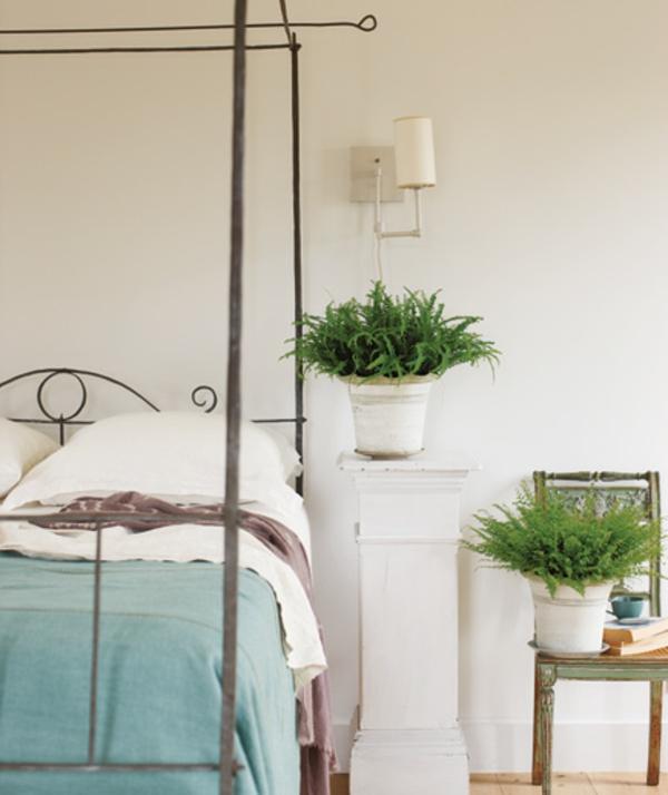ambiance-nature-joviale-chambre-à-coucher-plante-verte