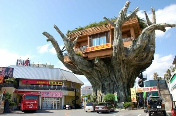 cabanes-dans-les-arbres-au-Japon