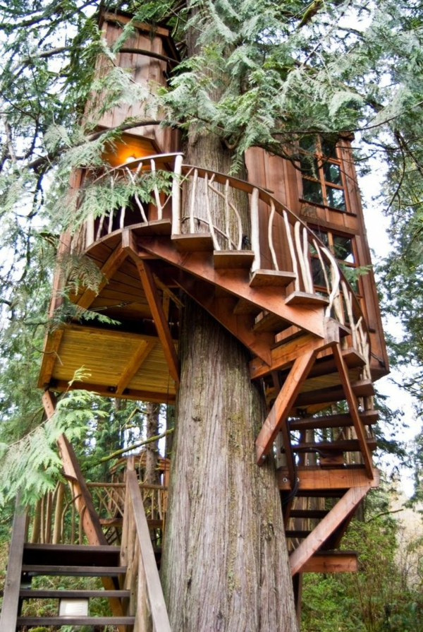 cabanes-dans-les-arbres-bâtie-autour-d'un-grand-arbre